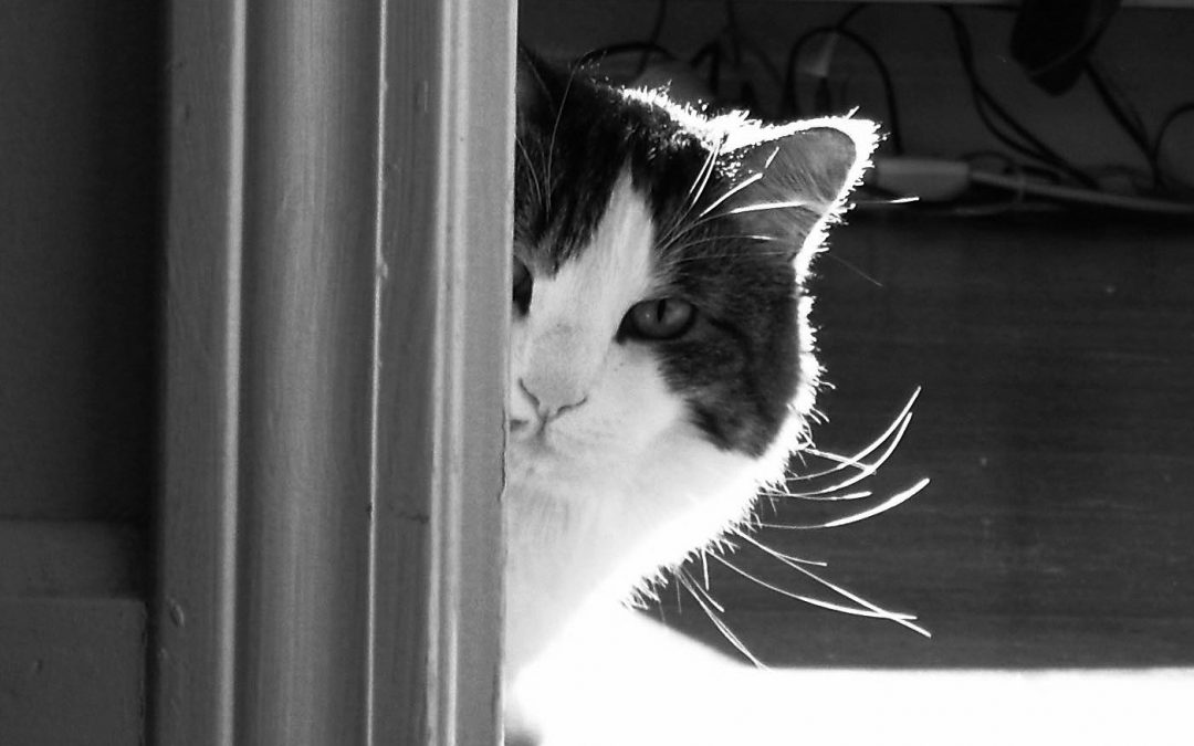 Creative Inspiration – A Capricious Cat or a Well-Trained Dog?